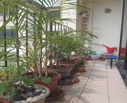pflanzen fã r den balkon paravent fur den balkon treefunder co