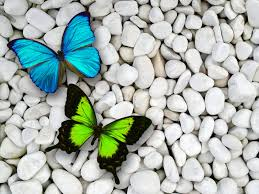 free download green butterfly wallpaper and pictures for desktop