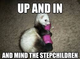 Ferret Meme - funny ferret pictures 盪 up and in