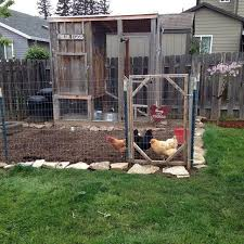 Lost In My Own Backyard Mount Hood Coop Backyard Chickens