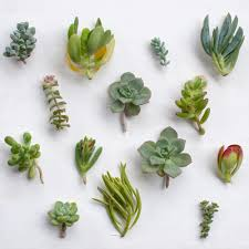 Succulent Plant How To Grow Healthy Succulents Extra Credit U2014 Wearable Planter