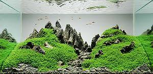 japanese aquarium aquascaping wikipedia