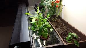 how to build an easy small scale aquaponics system for your