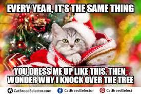Christmas Cat Memes - cat memes cat breed selector