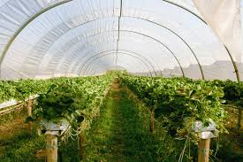 Greenhouse Starter Kits The Most Important Factors When Buying A Greenhouse Kit My