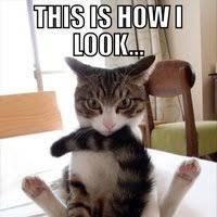 Happy Cat Meme - ember stone pierce s ember stone pierce cat memes album