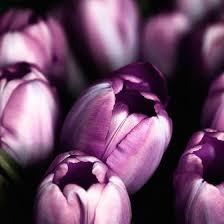 purple flowers purple flowers interflora