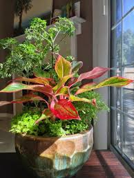 Indoor Garden Containers - 494 best 1 garden 2 images on pinterest taps flowers and plants