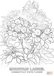 connecticut state flower coloring page free printable coloring pages