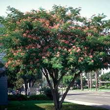 small tree flowering trees small ornamental trees for your