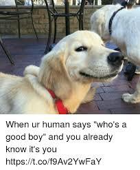 Doge Girl Meme - 25 best memes about whos a good boy whos a good boy memes