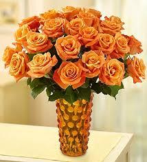 orange roses the meanings of orange roses from roseforlove