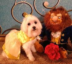 Beauty Beast Halloween Costumes 28 Disney Dog Costumes Images Dog Costumes