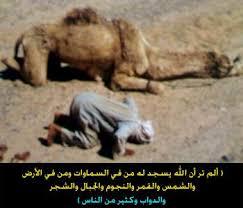 الصور التي ادهشت العالم نفسه .......... images?q=tbn:ANd9GcS