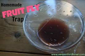 Homemade Fly Trap by Fruit Fly Apple Trap X X Us 2017