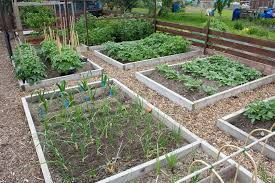 Garden Allotment Ideas Britains Best Allotment Competition Allotment Garden Diary