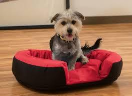 Kong Dog Beds Best Kong Dog Bed Ideas On Pinterest Dog Barking At Night Dog Beds