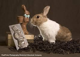 chocolate rabbits thinking about getting a real bunny for easter here are some