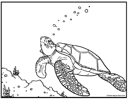 sea turtle coloring pages getcoloringpages com