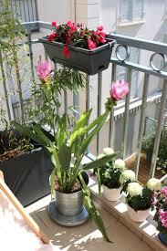 amenager balcon pas cher decorer balcon plantes idees comment décorer le mur avec une