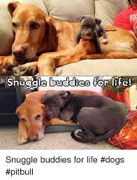 Snuggle Meme - snuggle buddies for life snuggle buddies for life dogs pitbull