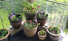 excellent how to plant a miniature garden in a big pot part 1 the
