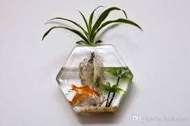 Buy Glass Vases Online Hexagon Glass Wall Planter Terrarium Glass Wall Fishbowl Desktop