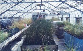 nursery native plants gulf coast research laboratory