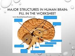 biological basis of behavior chapter 3 supa psy 205 the brain