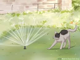 Keep Cats In Backyard How To Keep Cats Away 9 Steps With Pictures Wikihow