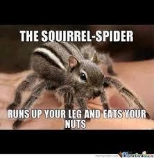 Squirrel Nuts Meme - squirrel spider eats your nuts by shadowgunz21 meme center