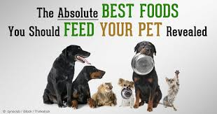why feeding your pet a homemade dog food can be beneficial
