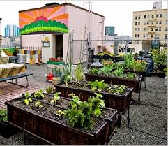 urban vegetable gardening roof appliance in home