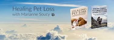 grieving loss of pet healing pet loss home