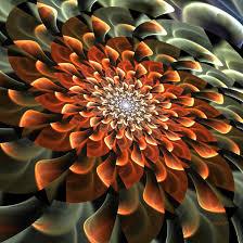 november flowers november flower by baba49 on deviantart