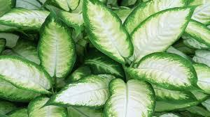 homelife top 15 indoor plants