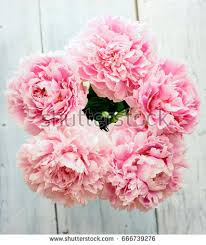 Peonies Bouquet Peony Bouquet Stock Images Royalty Free Images U0026 Vectors