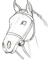 how to create a horse head drawing using pencil step by step