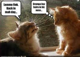 Cat Facts Meme - fun facts and training tips
