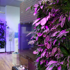 plants for decorating home with beauty of nature kharlota