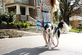 how to train dog to stop barking how to stop your dog from barking