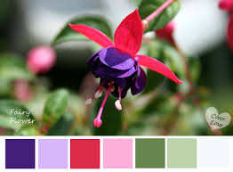 Complementary Colors Generator by Color Harmony Exterior Design