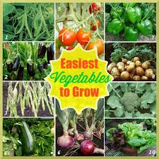 how to grow vegetable plants at home getpaidforphotos com