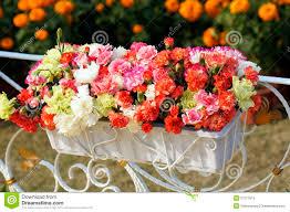 carnation flowers images carnations pinterest globalrose 200