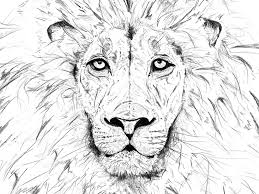 lion king sketch by martin roberts dribbble