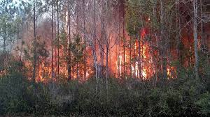 Wildfire Burning Near Me by Florida Fire Started By Book Burning Destroys At Least 10 Homes