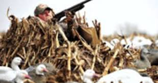how to shoot better from a layout blind outdoor life