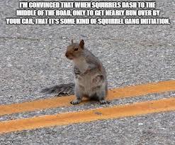 Squirrel Meme - funny squirrel meme imgflip