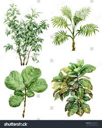 branches leaves tropical plants stock illustration
