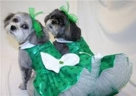 19 st patrick u0027s day dogs so cute they will make you feel drunk